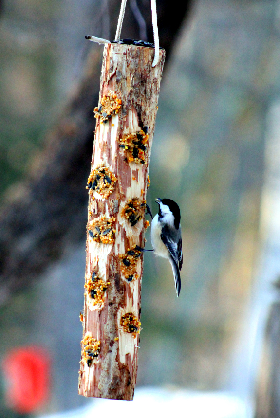 Bird feeder - Are you looking for fun ways to bond with your kids? Finding something you both like can be challenging! Read on for some creative woodworking projects you can do together and make some awesome memories in the process!