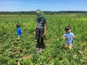 2 toddlers and teenagers in strawberry patch picking strawberries