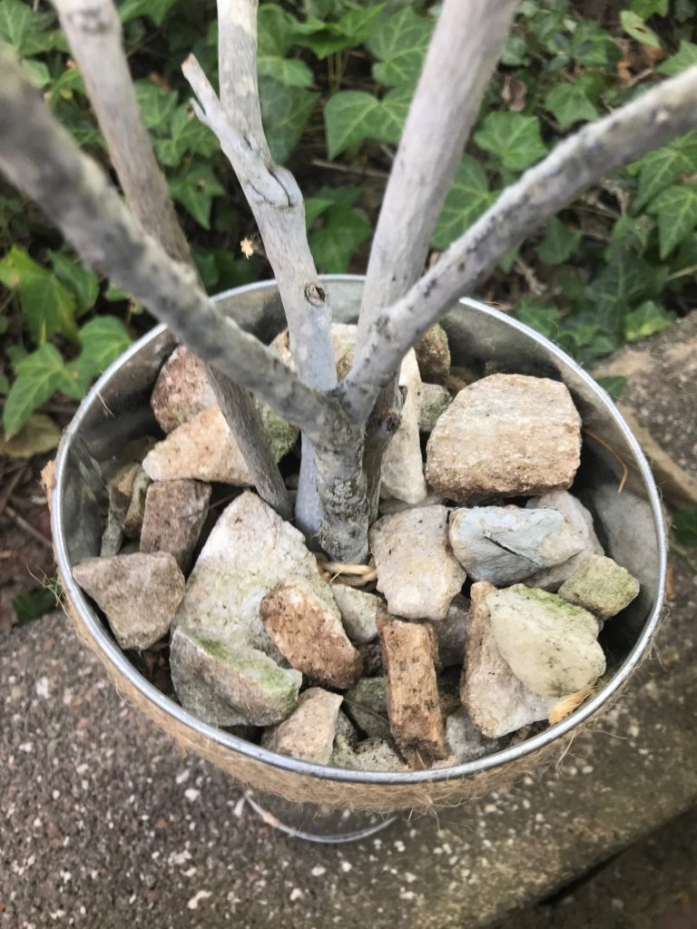branches in bucket with rocks in bucket for DIY acorn tree